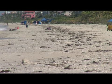 Red tide now affecting every beach in Collier County