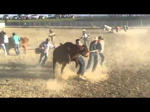 Wild cow race 2013