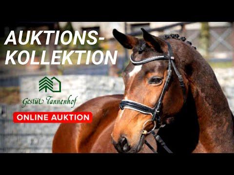 Auktions-Kollektion Gestüt Tannenhof   Ihr Sucht Einen Neuen Partner? Jetzt Bieten 🔨 April 2020