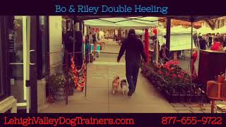 Riley & Bodine first time double heeling ||| Lehigh Valley Dog Trainers: Off Leash K9 Training