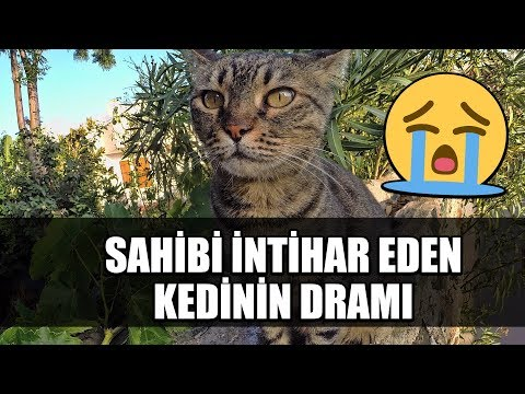 Sahibi intihar eden kedinin dramı :( - YouTube