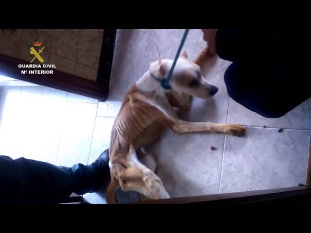 Rescatan a un perro famélico en Camariñas y detienen a dos personas