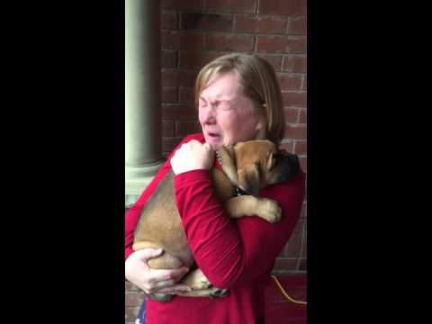 A Rideout Puppy Christmas surprise
