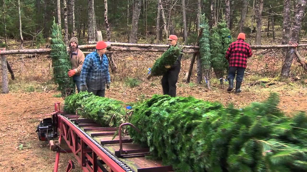Oh Christmas Tree Trailer, Land and Sea - YouTube