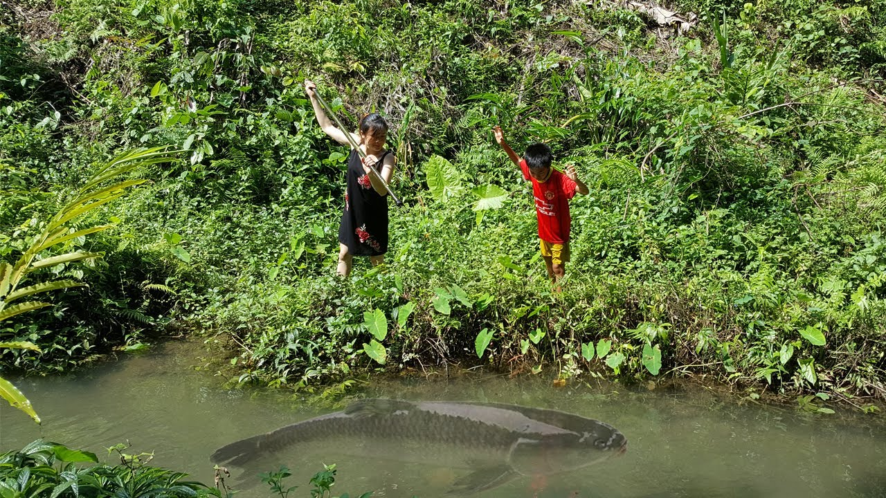 VN Daily - Beautiful girl and children catch fish on the stream - Vietnam Traditional Fishing