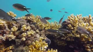 Snorkeling Sea Gardens in Panama