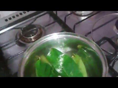 Chá da Folha Verde de Graviola Francisco Farias #chádefolhadegraviola #acuradocâncer #acetogeninas