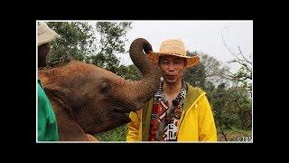EXILE USA、Elephant Orphanageを訪ねてください「人間と動物はこの地球...