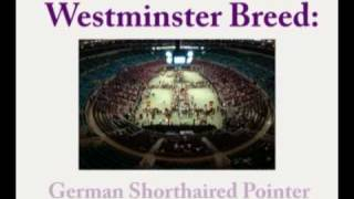 Westminster Breed:   German Shorthaired Pointer