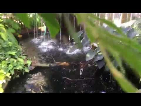 Callaway gardens butterfly house