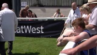 Moch Cymreig Iau - rhan 1 | Welsh pigs - juniors part 1