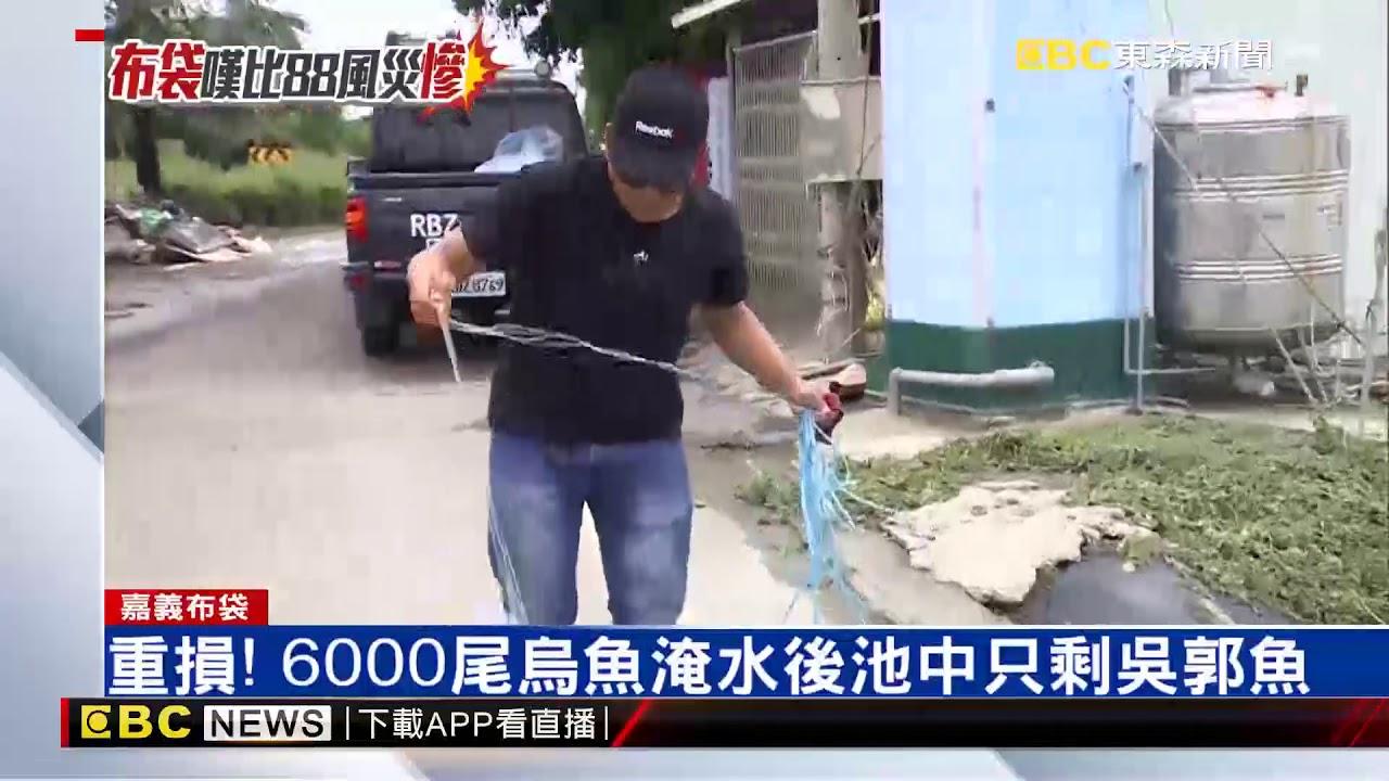 嘉義淹水網紅釣蝦場 泰國蝦一夜流光 - YouTube