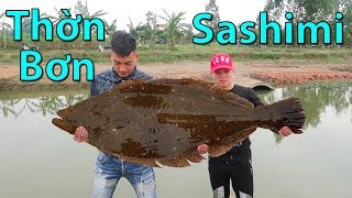 Hữu Bộ | Ăn Sống Cá Thờn Bơn | Sashimi Cá Bơn