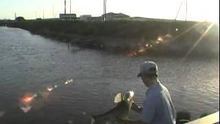 両総用水の草魚釣り