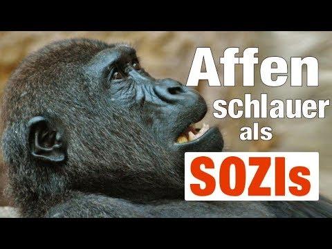 Affen schlauer als Sozis ?