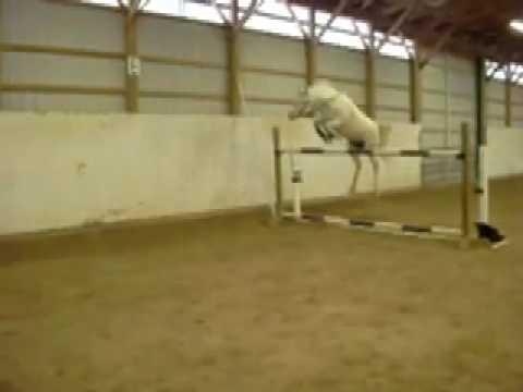 Pony Jumps 5 Feet Youtube