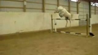Pony jumps 5 feet