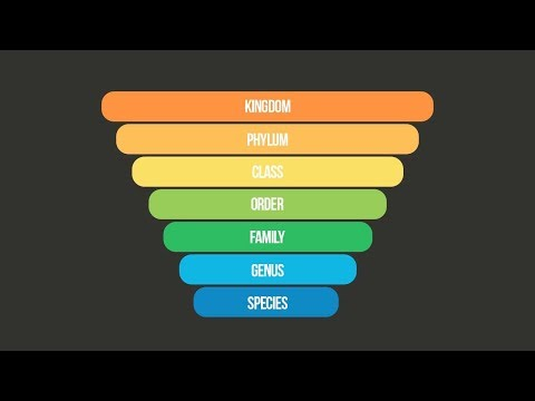 SCIENTIFIC CLASSIFICATION SONG (Taxonomy Song) | Science Music Video