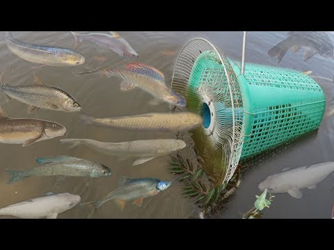 Creative Girl Make Fish Trap Using PVC - Fan Guard -  Basket To Catch A Lot Of Fish