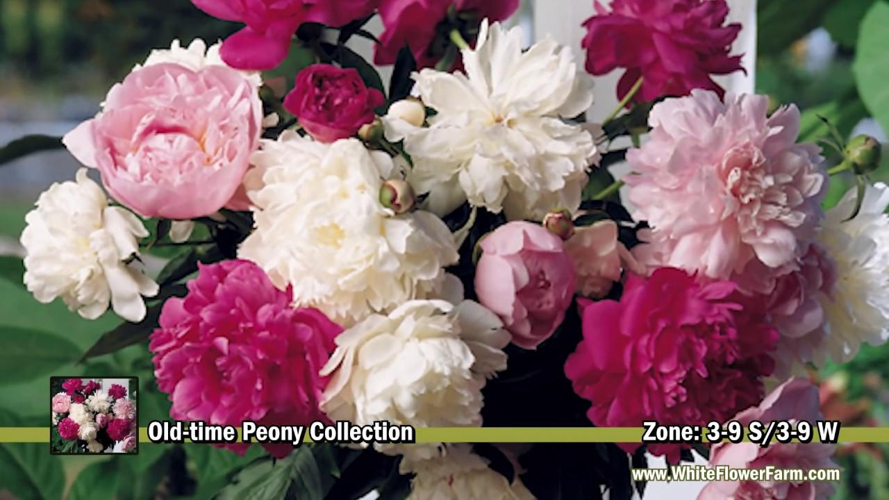 Flores de diferentes tipos youtube - Tipos de plantas ...