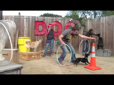 Berkeley Trick Dog Training: Canine Circus Class sept 25, 2011, Bay Area Dog Trainer