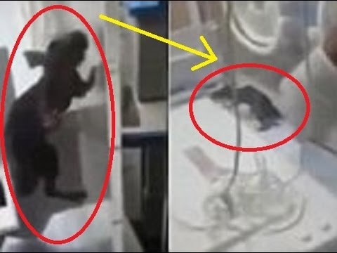 Shocking footage shows RAT inside incubator in Belize