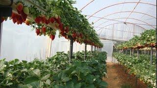 NC Tarım Growtech Eurasia 2012 Tarım Fuarında Kanal B İle Röportaj
