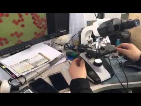 ece egitim gorsel egitim laboratuar 600x biyoloji mikroskop dijital mikroskop 1