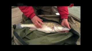 Уроки рыбной ловли. 1 выпуск. Судак в Олд Бери Хилл
