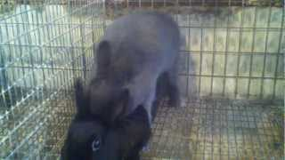 playboy bunny sex.3gp