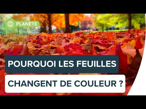 Automne : pourquoi les arbres perdent-ils leurs feuilles ? | Futura