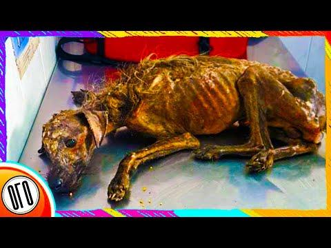 Эта Собака Практически Погибала...ВСЕМ БЫЛО ПЛЕВАТЬ(Кроме Одного Человека!)