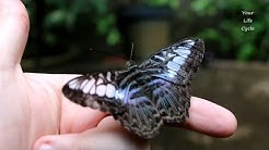 How to have a Butterfly on your finger