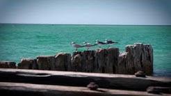 Birds of Anna Maria Island