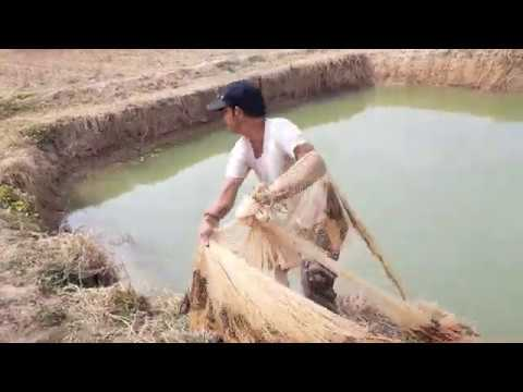 Net Fishing।Traditional Cast Net Fishing In Small Pond। Fishing With A Cast Net (Part 66)