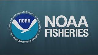 Kelp Farming in Alaska - NOAA