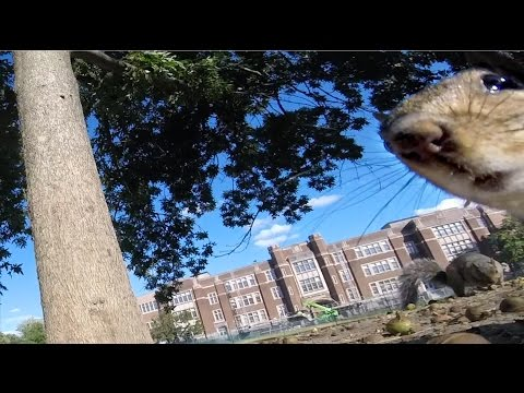 GoPro Awards: Squirrel Runs Off With GoPro
