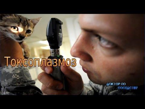Видео источники токсоплазмоза