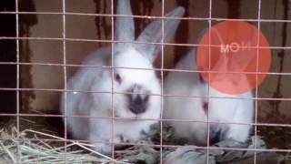 Кролики + голуби ( новости моего канала )
