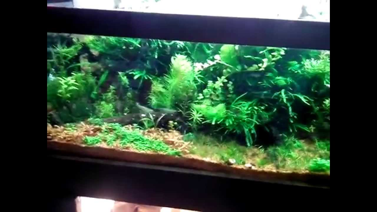 350 liter aquarium youtube. Black Bedroom Furniture Sets. Home Design Ideas
