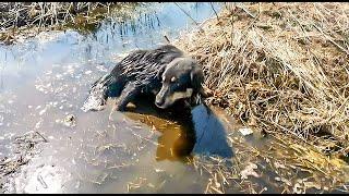 Пёс Хмурый найден в луже с ранением в позвоночник😢 Как он живет сейчас?🤔 Смотреть всем!