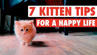 7 Cats Who Know The Secrets To Happiness