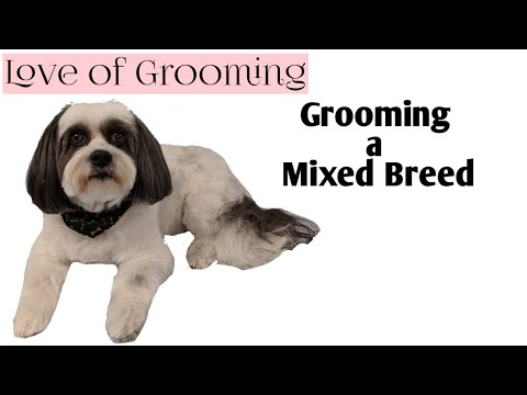 Dog Grooming From Bath to Scissor Finish | Grooming a Mixed Breed