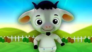 bébé chèvre Oui maman | Chansons de Bébé | Baby Goat Yes Mama | Farmees Française