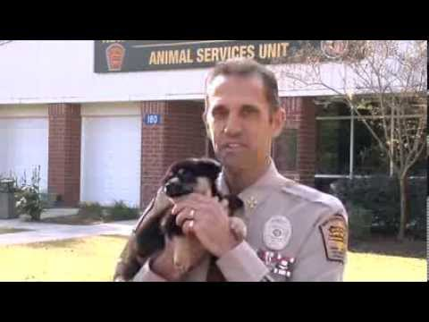Animal Services Unit | New Hanover County
