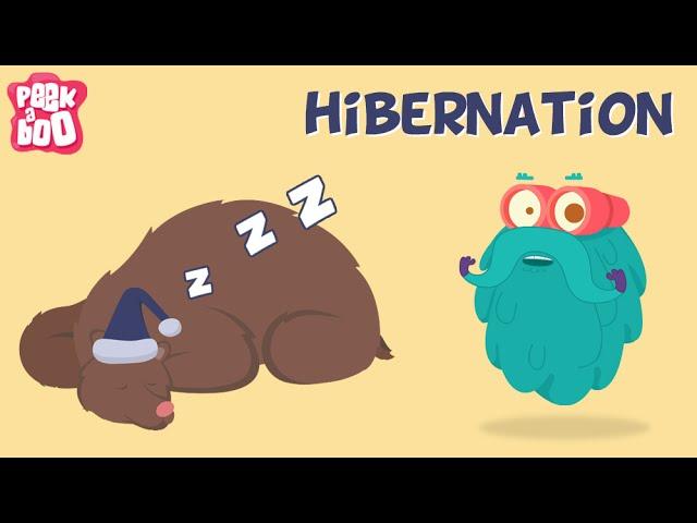 Hibernation Facts For Kids – Fun Facts About Hibernation
