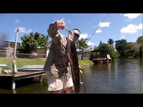 Snakehead Catching and Culling in Florida