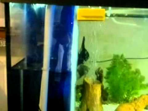 Come costruire un filtro biologico doovi for Filtro tartarughiera esterno