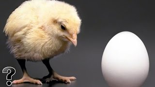 What Came First The Chicken Or The Egg?