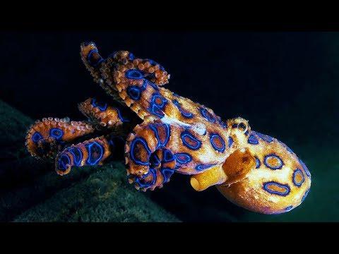10 อันดับ สัตว์ใต้มหาสมุทรที่อันตรายที่สุดในโลก